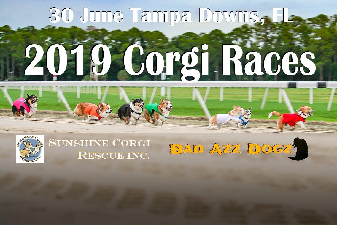2019 Corgi Races At Tampa Downs, Tampa Fl – Jun 30, 2019 – 4 Pertaining To Tampa Bay Downs Race Track Calendar