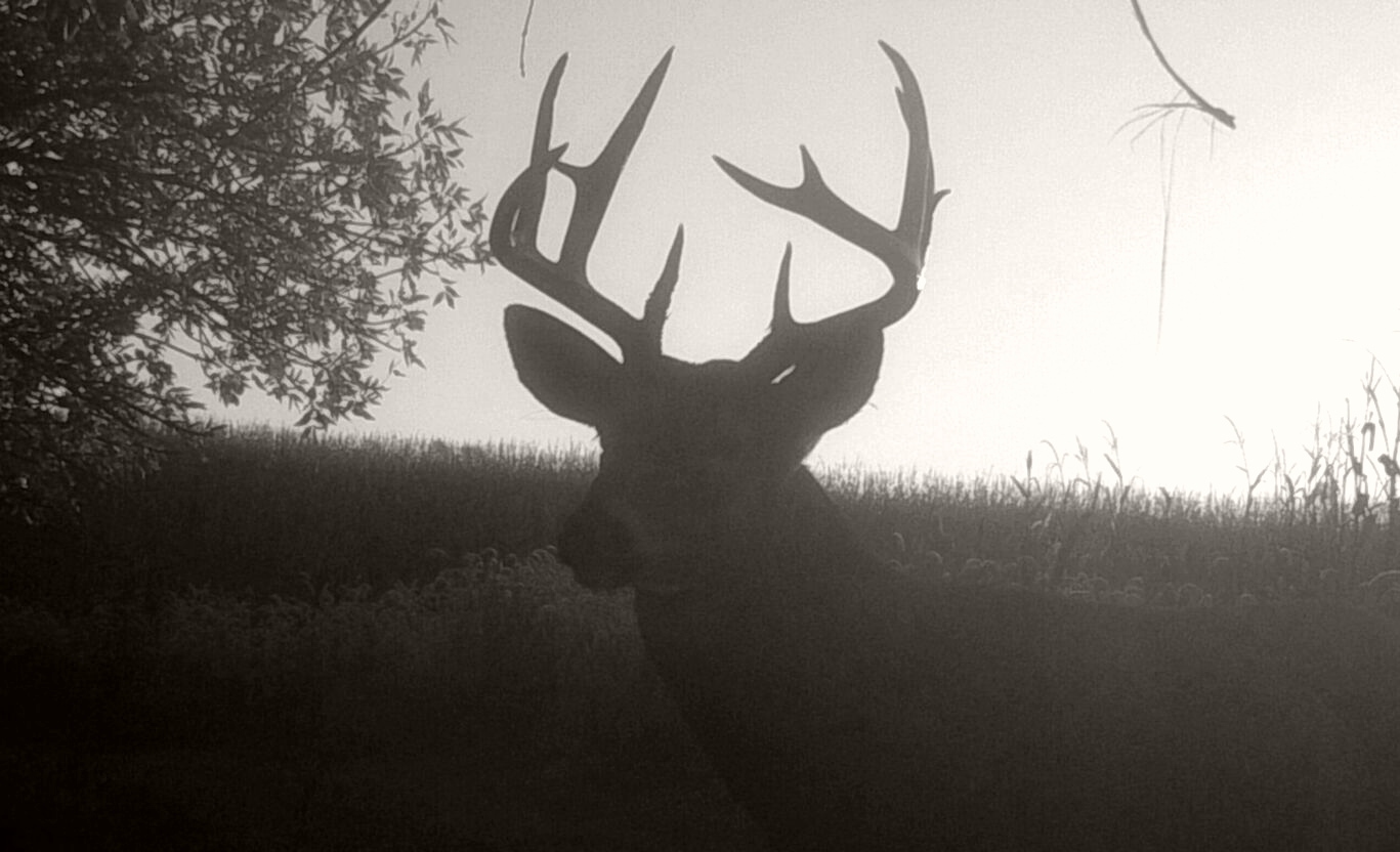 3 Critical Moon Phase Tips For Deer Hunting   Whitetail Intended For Deer & Deer Hunting Whitetail Lunar Calendar