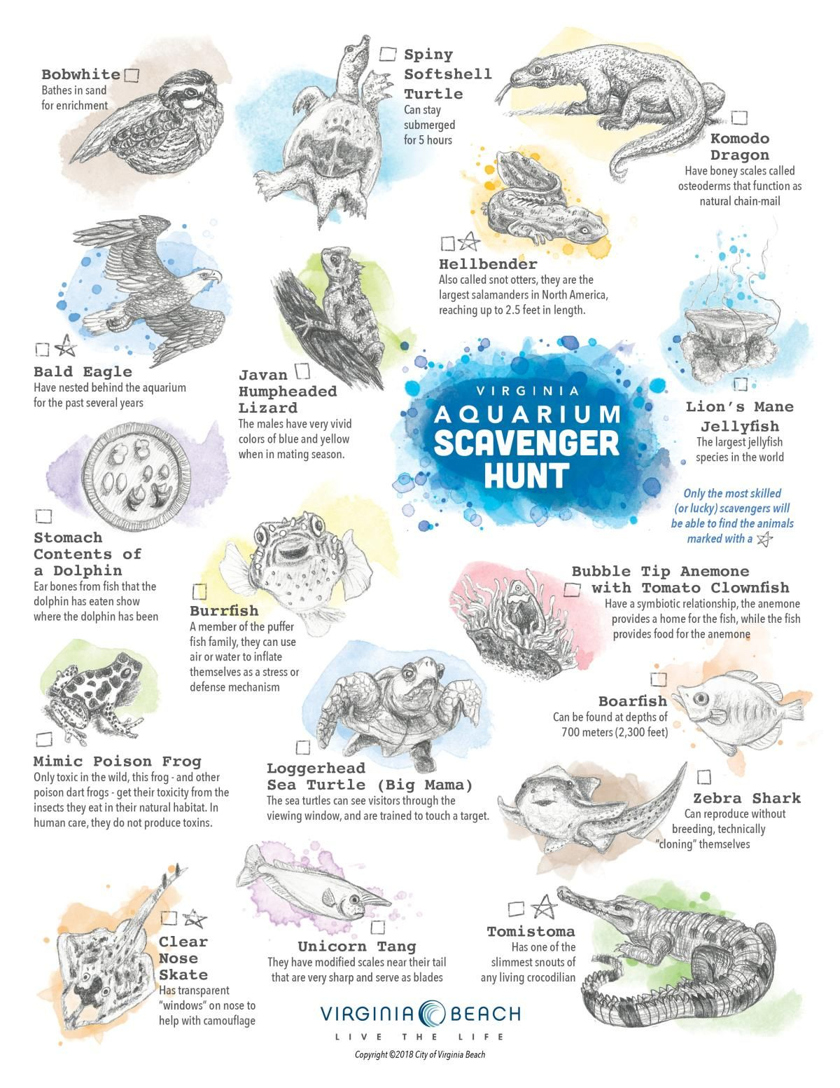 Explore The Virginia Aquarium And See What You Can Find with Printable A Day Bday Schedule Virginia Beach