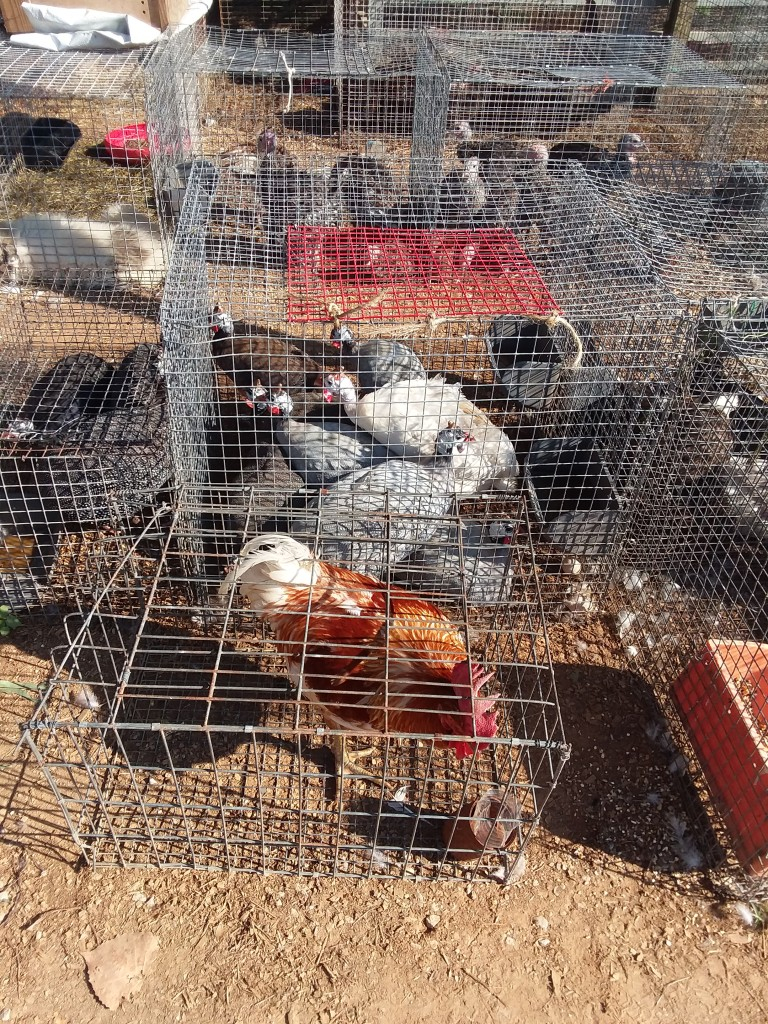 Flea Markets & Animals   Gucci To Goats In Ripley Miss Trade Day
