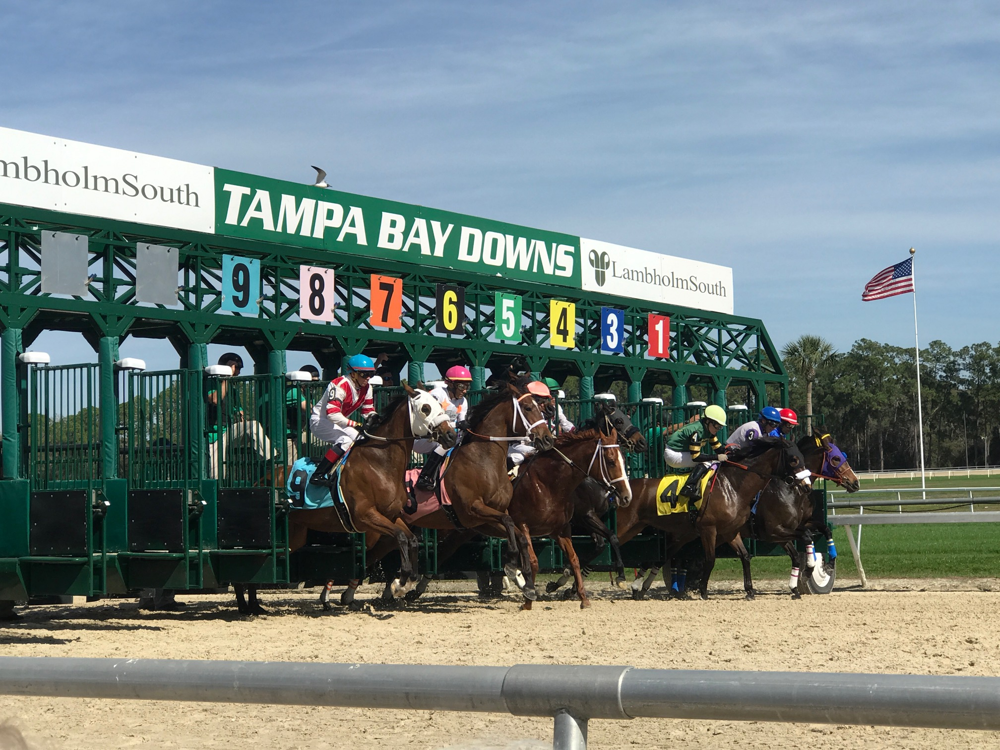 Gulfstream, Tampa Bay Downs, Oaklawn & More Still Available Inside Tampa Bay Downs Race Track Calendar