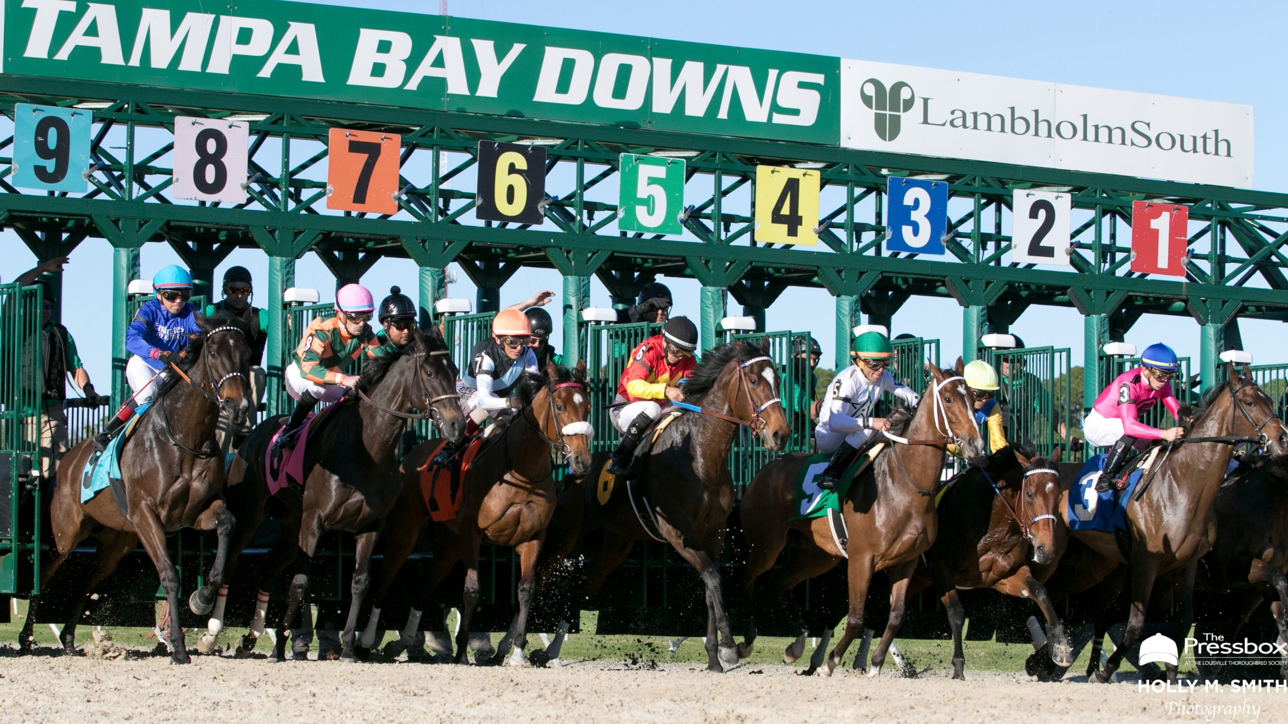 Horseracingnation: An In-Depth Look At The 2020 Tampa for Tampa Bay Downs Stakes Schedule 2021