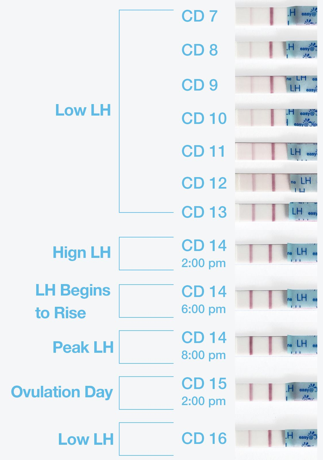 Pin On Ovulation Cycle & Ovulation Testing Inside When To Take Pregnancy Test Calendar