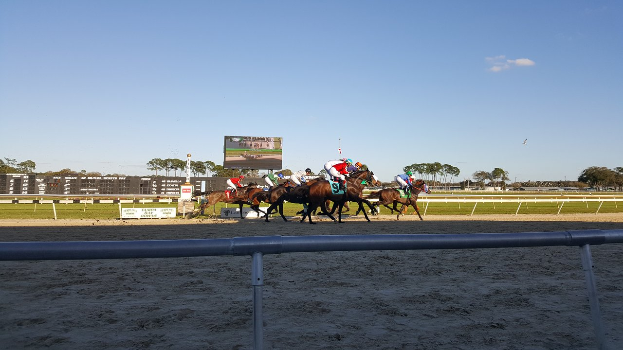 Tampa Bay Downs – 2020 All You Need To Know Before You Go Pertaining To Tampa Downs Race Dates