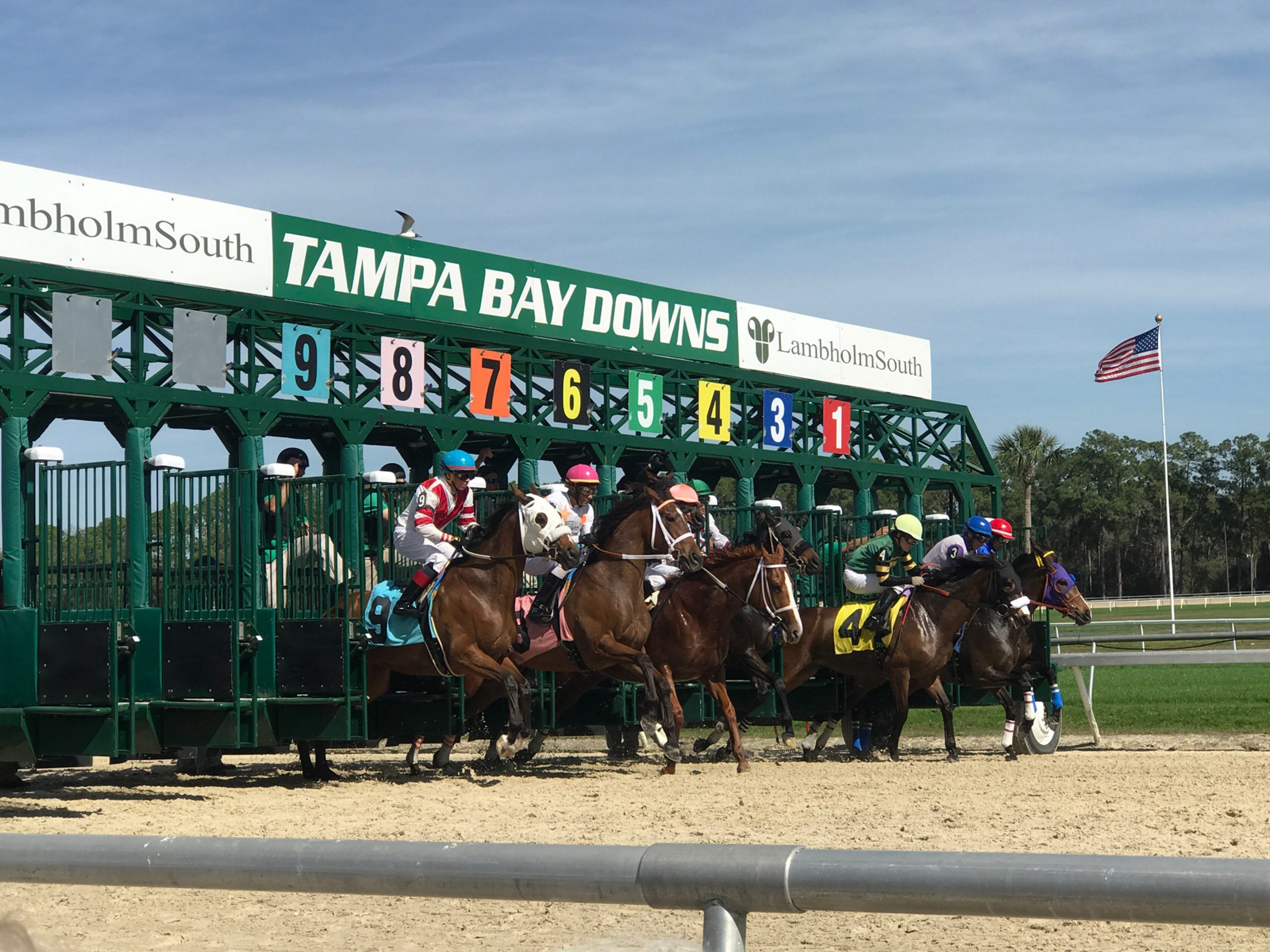 Us Racing – Tampa Bay Downs Returns In June   Quickgallop Pertaining To Tampa Downs Race Dates