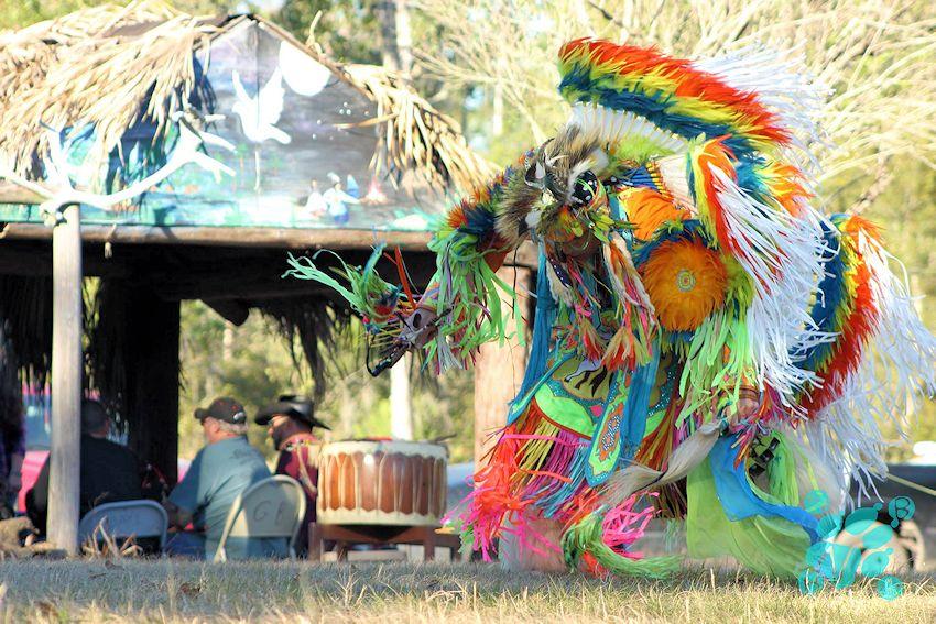 2017 Cox Osceola Seminole Fall Powwow – Florida Powwows Within So Florida Fairgrounds Schedule