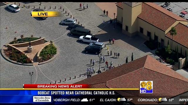 Bobcat Spotted Near Cathedral Catholic High School – Cbs Within San Jose City Schools Calendar