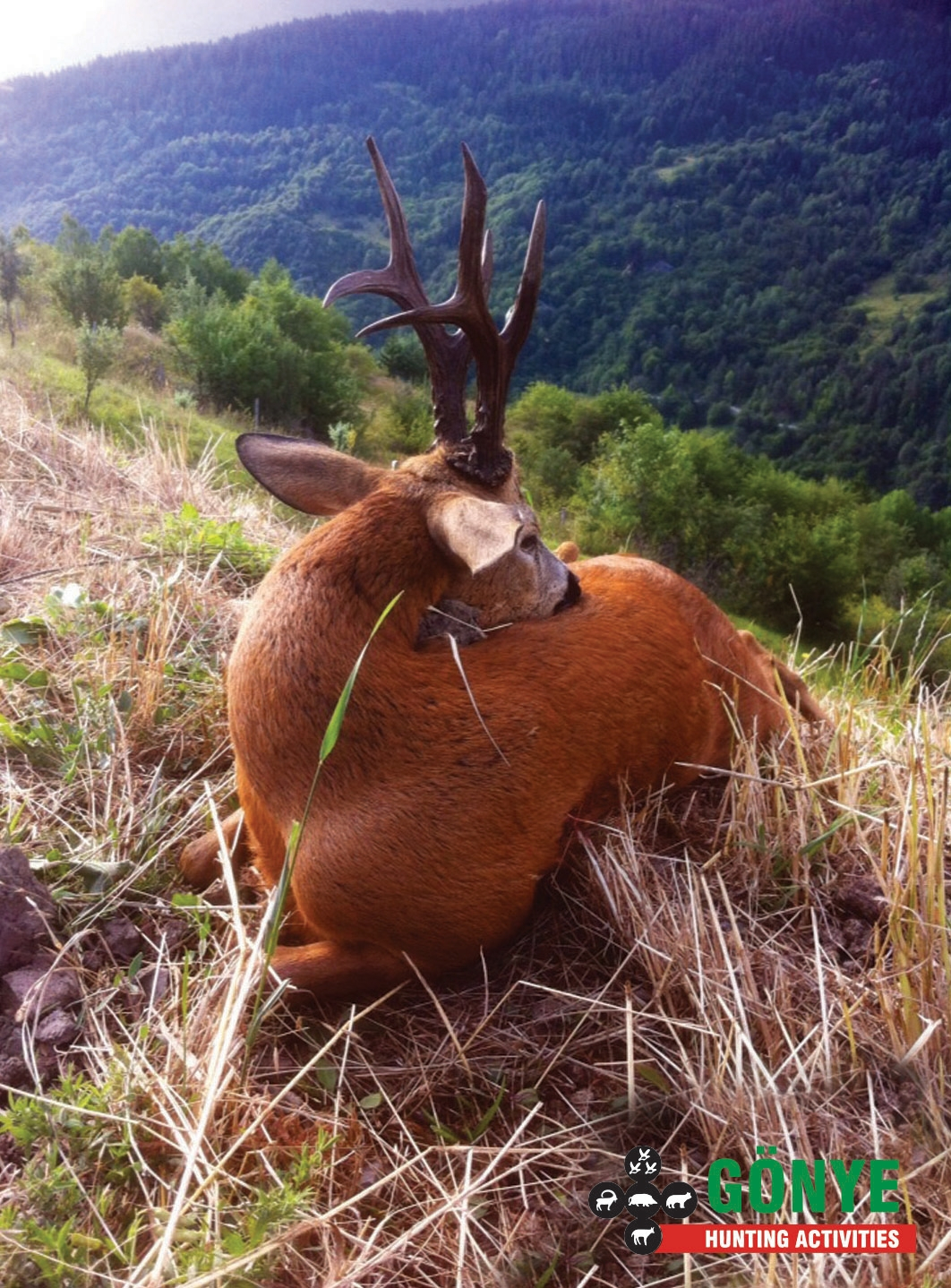Chevreuil D Anatolie / Chasse / Gönye Hunting Activities Throughout Louisiana Deer Rut Dates