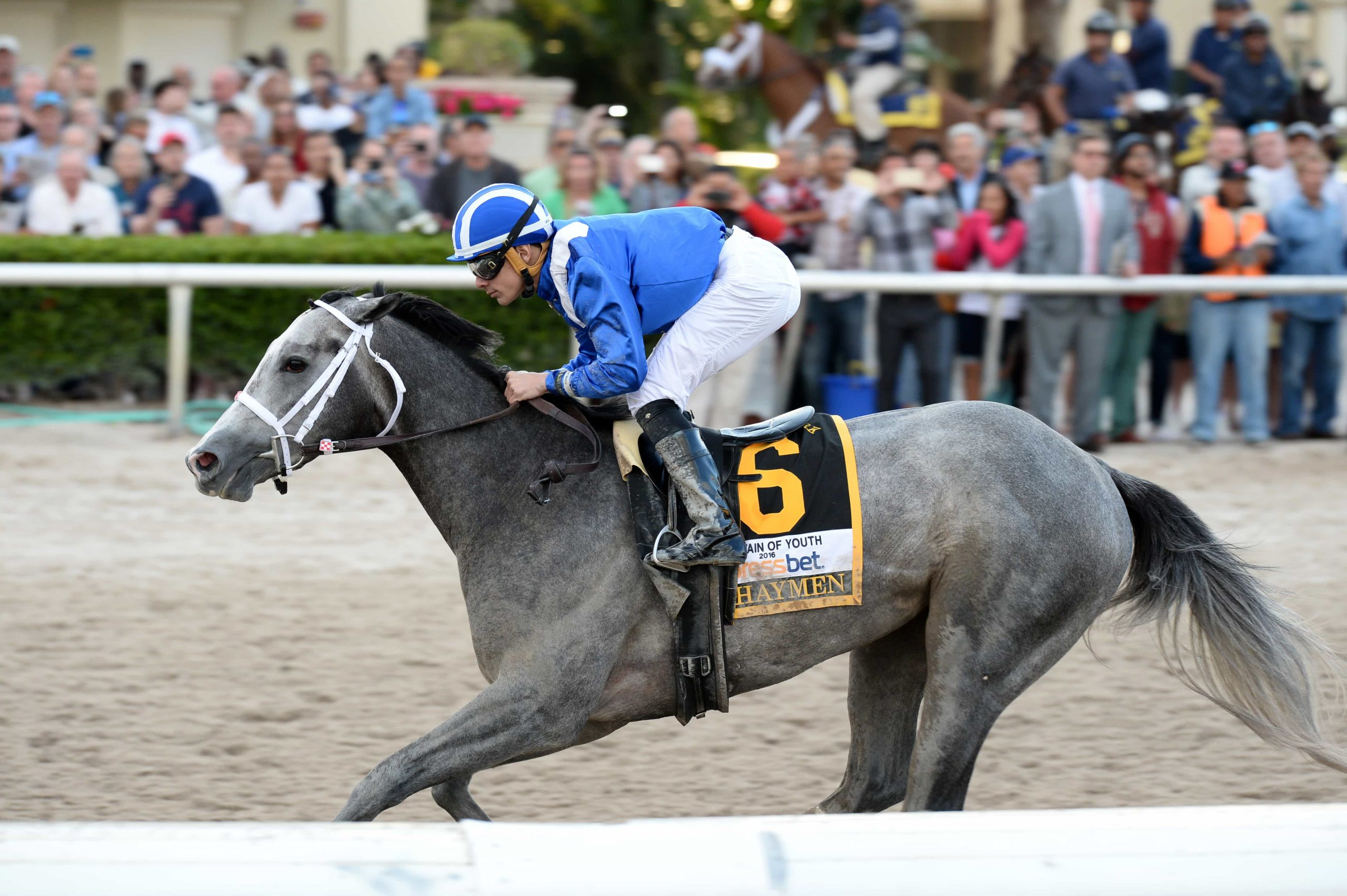 Gulfstream Park Notes: Tampa Bay Derby For Awesome Banner Throughout What Time Does The Horse Races At Tampa Bay Downs Start