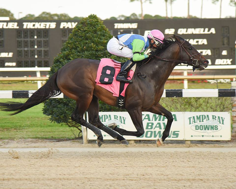 High Stakes And High Octane Excitement At Tampa Bay Downs Regarding Tampa Bay Downs Schedule