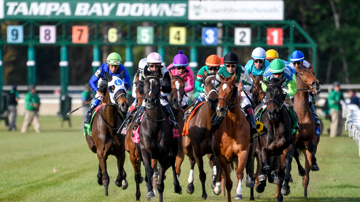 Horse Racing Picks For Wednesday, April 15: Best Value Inside Tampa Bay Downs Racing Calendar