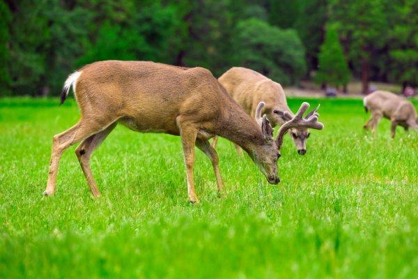 Mâles Cerfs Rut Combats — Photographie Hlavkom © #175736638 Within Louisiana Deer Rut Dates