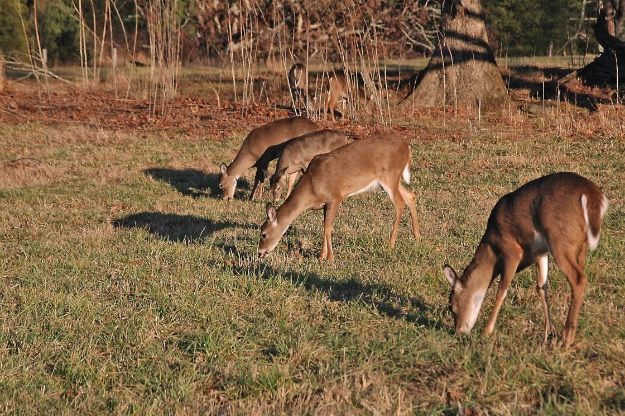 The Effect Moon Phase Has On Hunting Deer | Mossy Oak # With Deer And Moon Phase