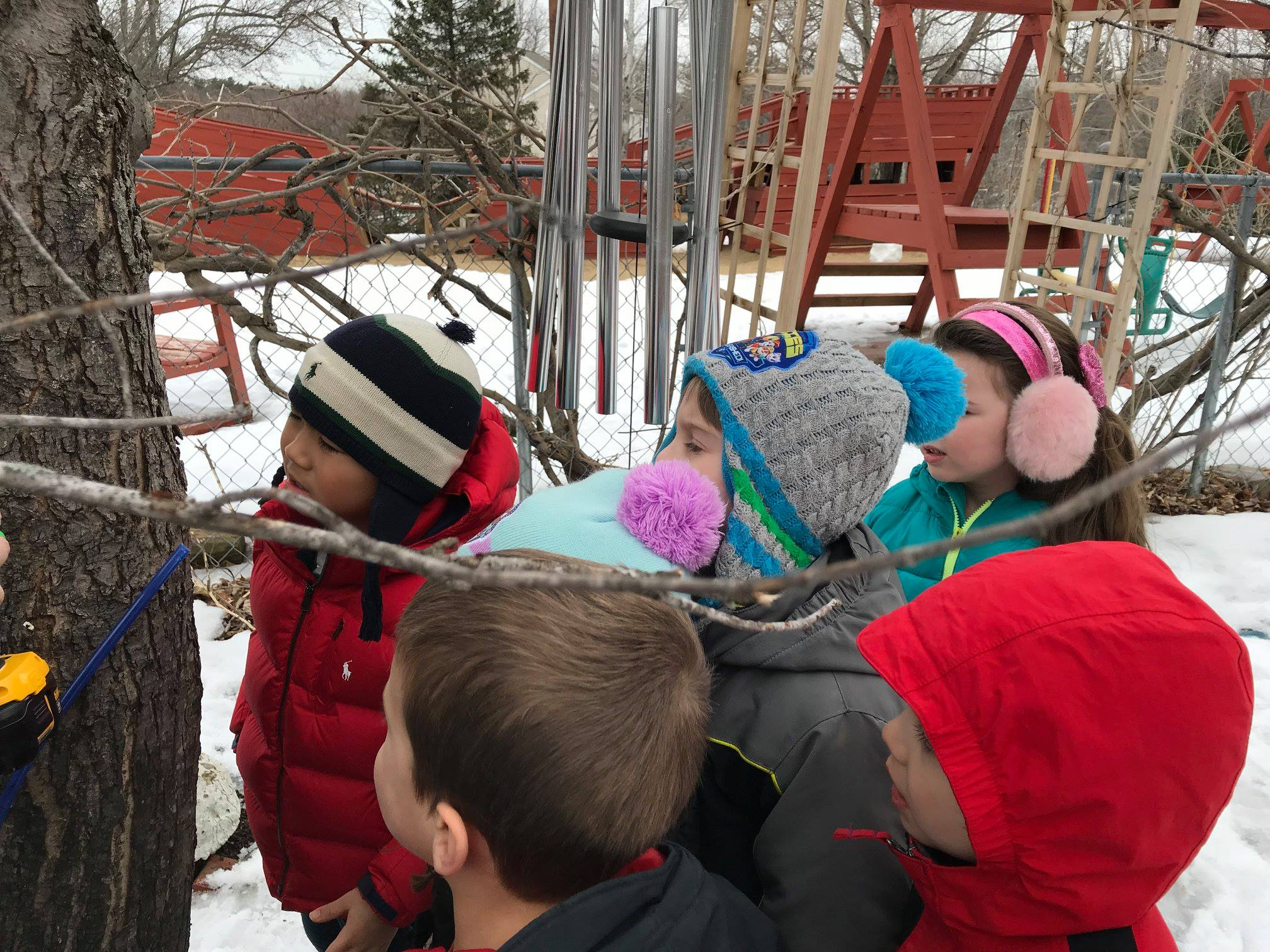Tree Tapping   Merrimack Valley Montessori School Within Salem Nh School Calendar 2021