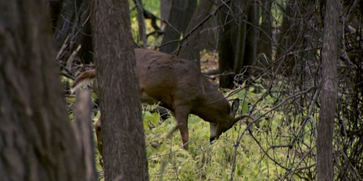 Wildlife Officials Report Difficulties Removing Deer With Crow Wing Court Calendar