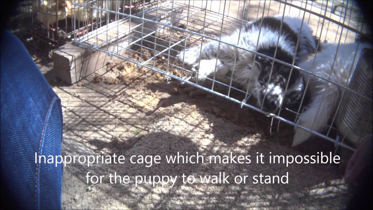 Canton Dog Alley - An Animals' Angels Investigation - Youtube For Canton Trade Days 2021