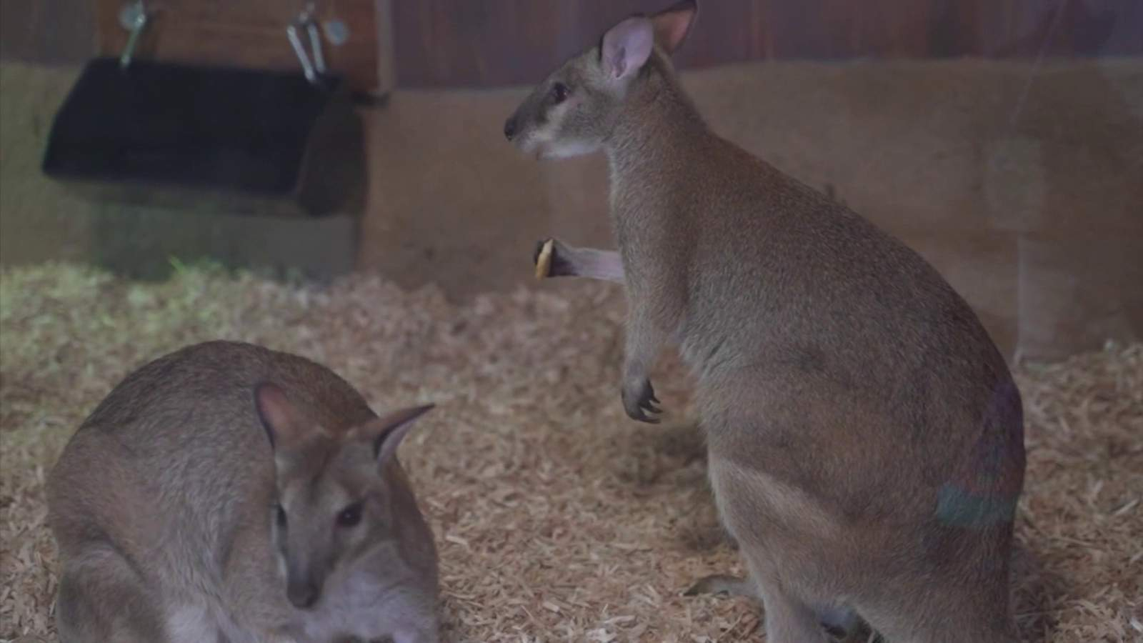 The Things These Animals Do Look Like Serious Tricks, But Intended For Deer Valley School Di