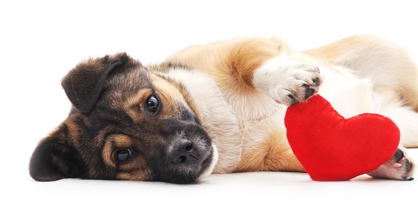Valentine'S Day Pet Spending Expected To Be Big This Year Pertaining To National Retail Federation 2021 Calendar