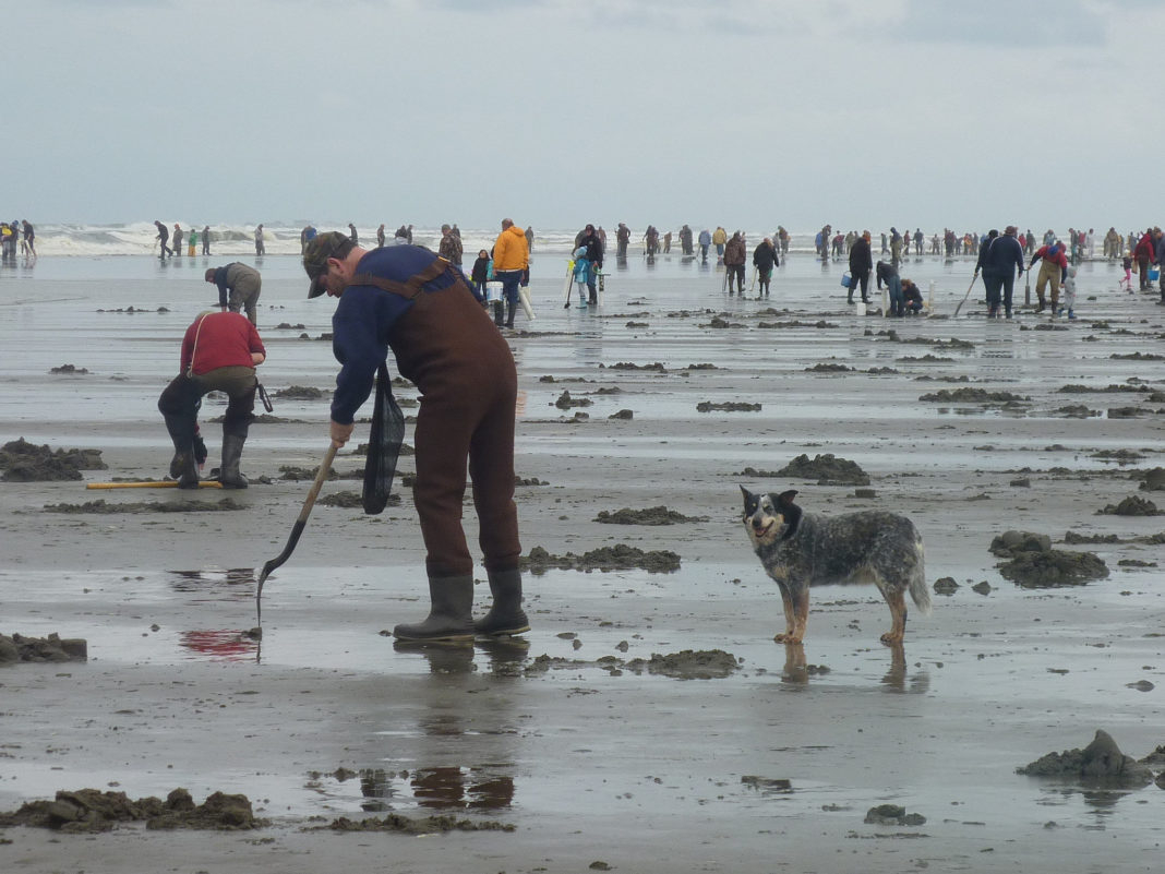 Wdfw Approves New Year'S Razor Clam Dig - Thurstontalk Intended For Long Beach Washington Events 2021